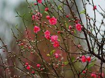 Những loài hoa, cây cảnh mang lại tài lộc cho năm mới Đinh Dậu