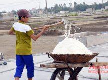 Đầu năm giá muối tăng vào vụ sản xuất