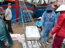 Ngư dân trúng đậm cá hố trong chuyến ra khơi đầu năm