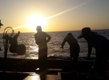 Đi đánh cá, một thuyền viên bị rơi xuống biển mất tích