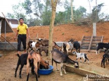 Nhiều tỷ phú nông dân xuất hiện từ phong trào xây dựng nông thôn mới
