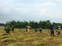 """Ảnh: Người dân miền Trung hối hả gặt lúa, gia cố nhà cửa """"chạy"""" bão"""